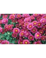 Jakie kwiaty na pogrzeb starszej osoby wybrać?