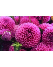 Co oznacza parzysta liczba kwiatów?