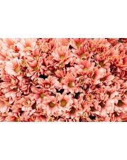 Kiedy należy sprzątać kwiaty po pogrzebie?